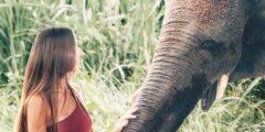 حقائق لاتعرفها عن الفيل